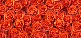 Red roses seamless pattern Royalty Free Stock Photo