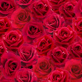 Red roses seamless pattern Stock Image