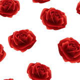 Red roses seamless pattern on a white background . Stock Photos