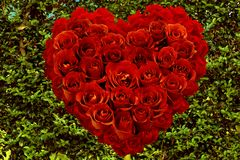 Red Roses Shaped As A Heart On a green Leaves royalty free stock photography