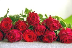 Red roses on silver background close up. Greeting card, background with beautiful flowers royalty free stock photography