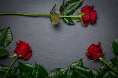 Red roses on slate background. With space for text Royalty Free Stock Images