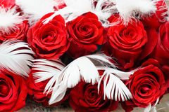 Red roses. With some feathers within Stock Images