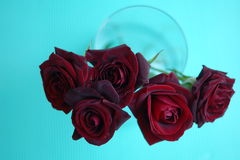 Red roses top view. Red roses in glass vase. top view Stock Photography