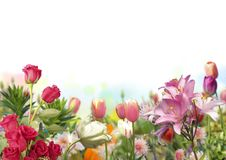 Red roses, tulips and lilium with defocused colored flowers in horizontal spring garden with white background royalty free stock photo