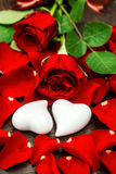 Red roses and two white hearts. Valentines Day Stock Photos