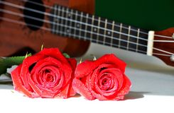 Red roses and ukulele. Dewy roses and string instrument with copy space stock photo