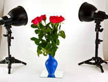 Red roses under spot lights. Red roses in vase illuminated by photographic spot lights with white studio background stock image