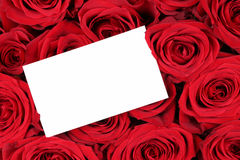 Red roses on Valentine's or mothers day with empty sign and copy. Space for your own text Stock Photo