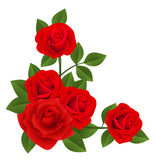 Red roses. Vector illustration. Royalty Free Stock Photos