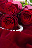 Red roses on velvet Stock Photo