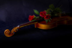 Red roses on violin. Fading into black background Stock Photos