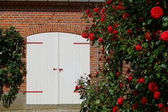 Red roses on the wall Stock Image
