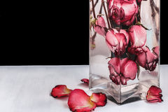 Red roses in water on black background. Red roses in water in a glass vase on a black and white background Stock Image