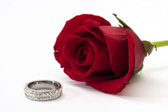 Red roses and wedding ring. On the white background Royalty Free Stock Image
