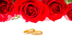 Red roses and wedding rings over white Royalty Free Stock Photos