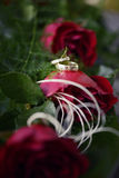 Red roses and wedding rings. Valentine red roses with wedding rings Royalty Free Stock Images