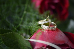 Red roses and wedding rings. Valentine red roses with wedding rings Royalty Free Stock Photo