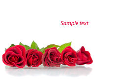 Red roses on the white Stock Photo