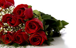 Red Roses on White Stock Photos