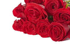 Red roses on white background. Beautiful red roses on a white background Stock Image