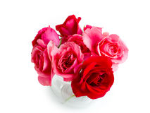 Red roses. Are on a white background Royalty Free Stock Photo