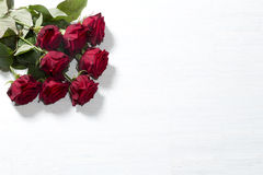 Red roses on white background Royalty Free Stock Photography