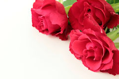 Red roses. On white background Stock Photo