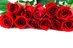 Red roses on white background. Bunch of red roses on white background Royalty Free Stock Photography