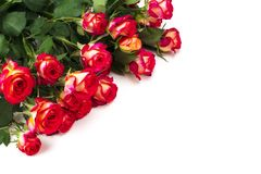 Red roses on white background with copy space.  Royalty Free Stock Photos