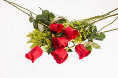 Red roses on white background Royalty Free Stock Photos