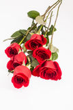 Red roses on white background Stock Photos