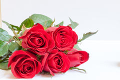Red roses. On the white background, rose the symbol of love stock image