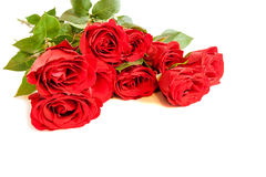 Red roses on white background. Selective focus Royalty Free Stock Images