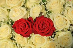 Red roses in a white bouquet. Red roses in a white rose bouquet Royalty Free Stock Photo