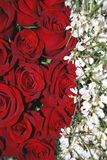 Red roses - white broom Royalty Free Stock Images
