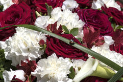 Red roses and white carnation Stock Image