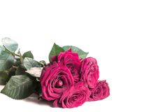 Red roses on white with copyspace royalty free stock photos