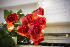 Red roses on a white piano with notes. And garlands royalty free stock photos