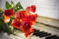 Red roses on a white piano with notes. And garlands royalty free stock photo