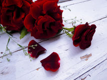 Red roses on white rustic background. Royalty Free Stock Image