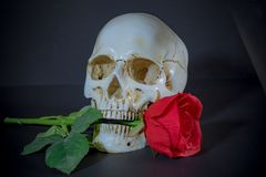 Red Roses and White Skull stock photography