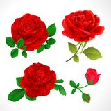 Red Roses With Buds And Leaves Vintage On A White Background Set Two Vector Illustration Editable Royalty Free Stock Photography
