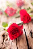 Red roses on wood Stock Image