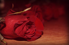 Red Roses on Wood stock photo