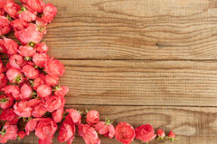 Red roses on wooden background Stock Image