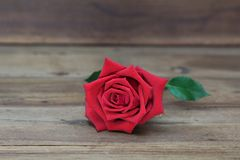 Red roses on a wooden background. stock photography