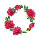 Red roses - wreath. Watercolor with rose flowers, buds for Valentine day. Red roses - wreath. Watercolor with rose flowers and buds for Valentine day stock illustration