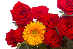 Red roses and yellow gerber close-up Stock Photo