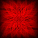 Red rosette - patterned background Stock Photography